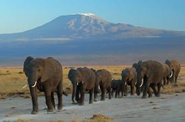 Hike Mount Kenya