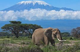 Kenya park